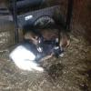 Our goats Howard and Henry, havin a snooze