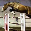 1.40m oxer